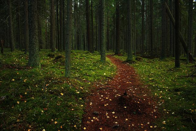 Syksyinen metsä, jossa puiden välistä menee polku.