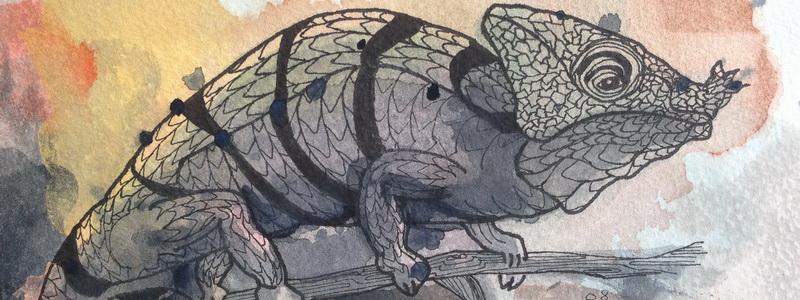 Liz I – Panther Chameleon