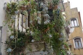 Taormina, celui aux cactées