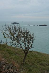 Pointe du Grouin-35