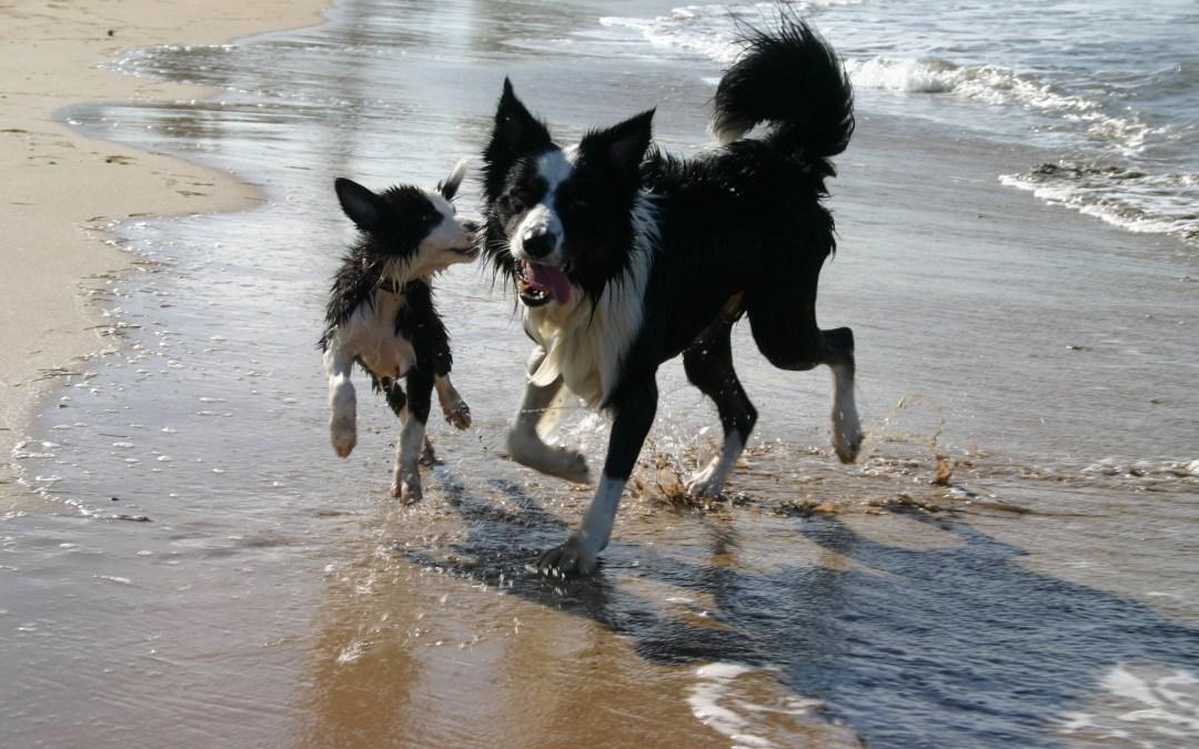 Dog Beach!