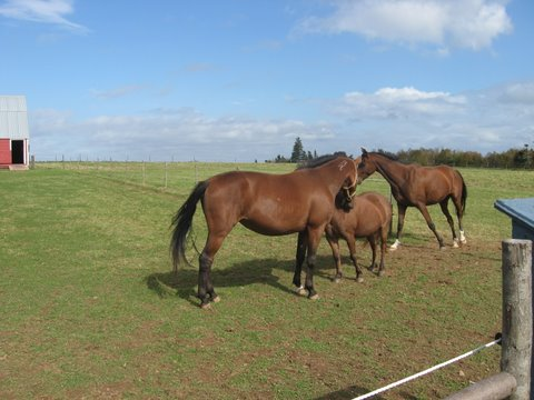 Horses meeting in the pasture
