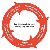The Vicious Cycle of Diabetic Ketoacidosis