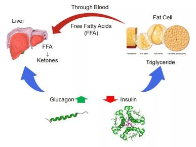 Keto Diet Explanation