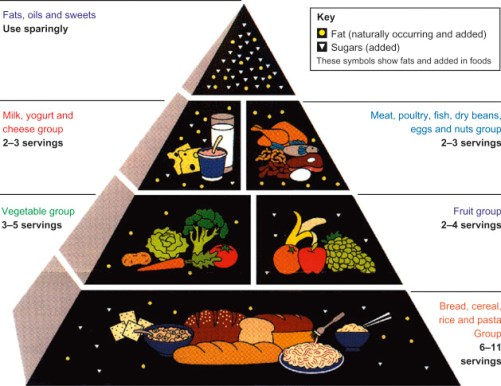 1992 USDA Food Pyramid