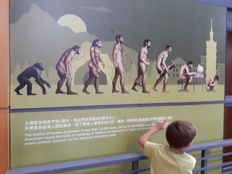 menselijke evolutie