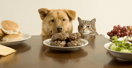 ketogenic dog food