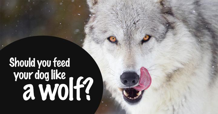 feed your dog like a wolf