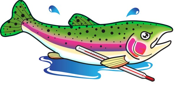 Maddy the rainbow trout. Illustration © Dustin LaCroix.