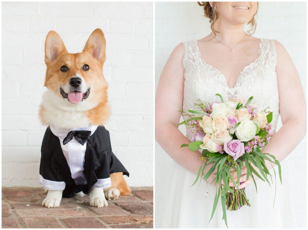 Corgi Dog Wedding Photos at Ashford Acres Inn in Cynthiana, Kentucky.