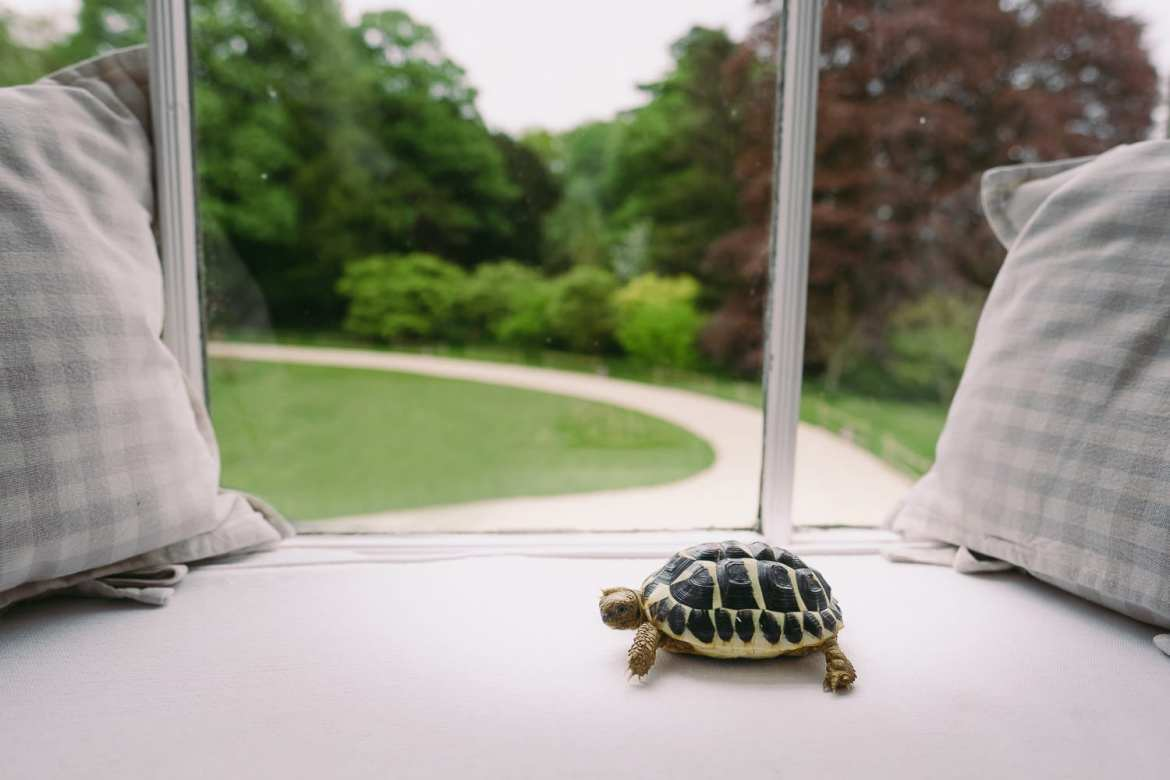 the ring bearer is a tortoise