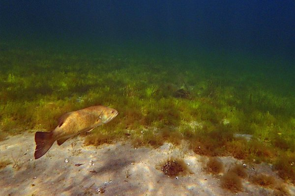 Canadian Freshwater Fish Underwater Footage Video Cover
