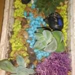succulant horticulture idea