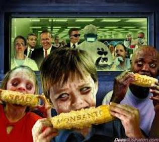 GM corn children