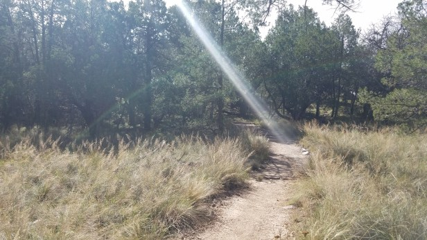 Laguna Meadows - wonderful mountain meadows filled with grasses, trees, and cacti.
