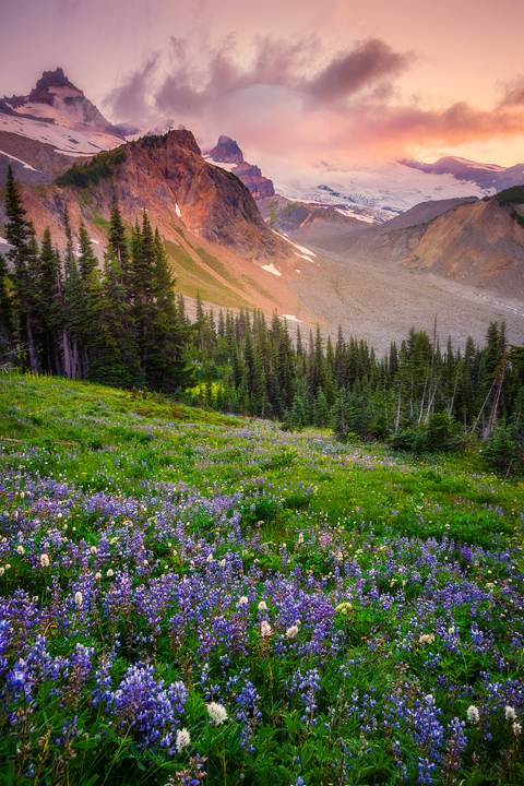 Images from Summerland Trail On Mount Rainier in the Pacific Northwest Of Washington State