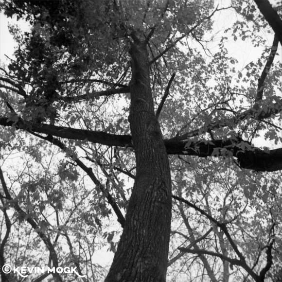 Trees in Assiniboine Park Winnipeg Manitoba