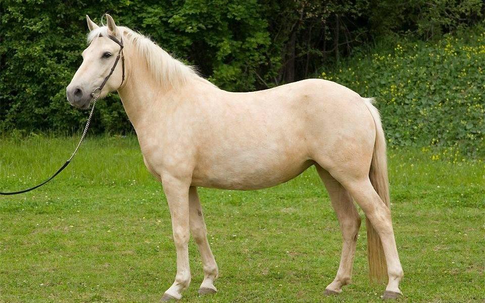 Antud rendile: Eesti hobune – Aura
