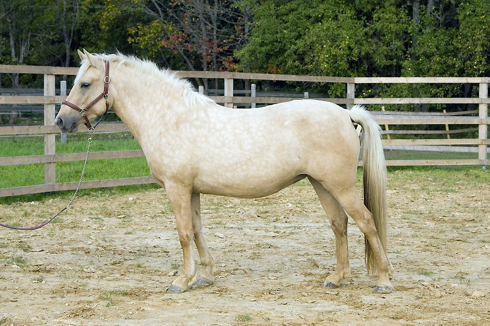 Eesti hobune – Telma E1067