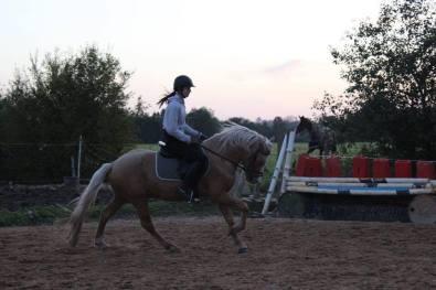 Eesti hobune Ten (2017)