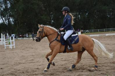 Eesti tõugu hobune TRON (2017)