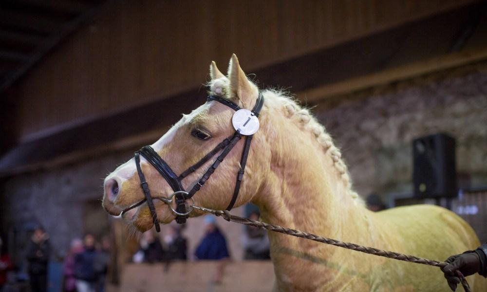 Eesti Hobuste Aastanäituse tulemused ja pildid