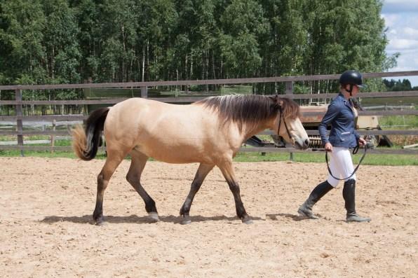 Eesti hobune Ebeeria 3 aastane (2108)