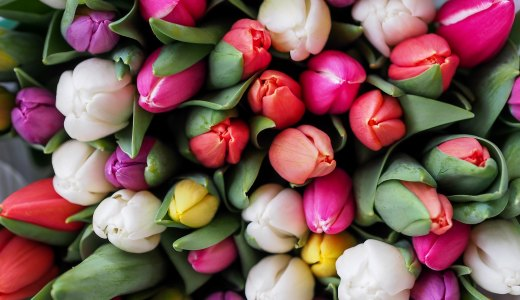 知られざるブルーハーツ『歩く花』の誕生秘話と歌詞の意味