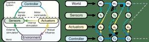 Sensorimotor Loop