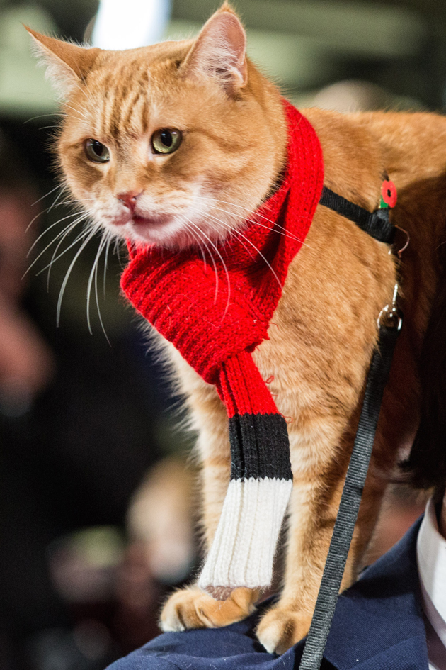 Interview A Street Cat Named Bob And His Bff James Bowen