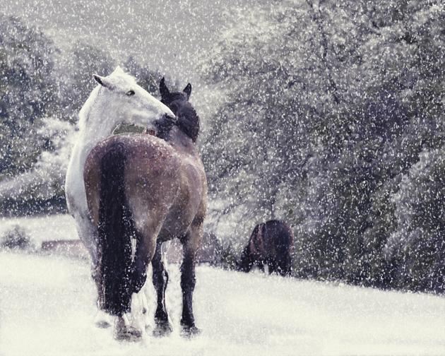 Pick Charity Cards To Help Equestrian Causes This Christmas