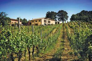Le Marche wineries
