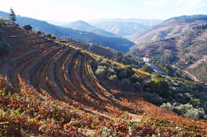 Quinta do Noval single varietal wines