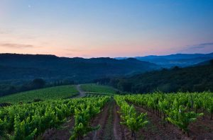 Buy French vineyards