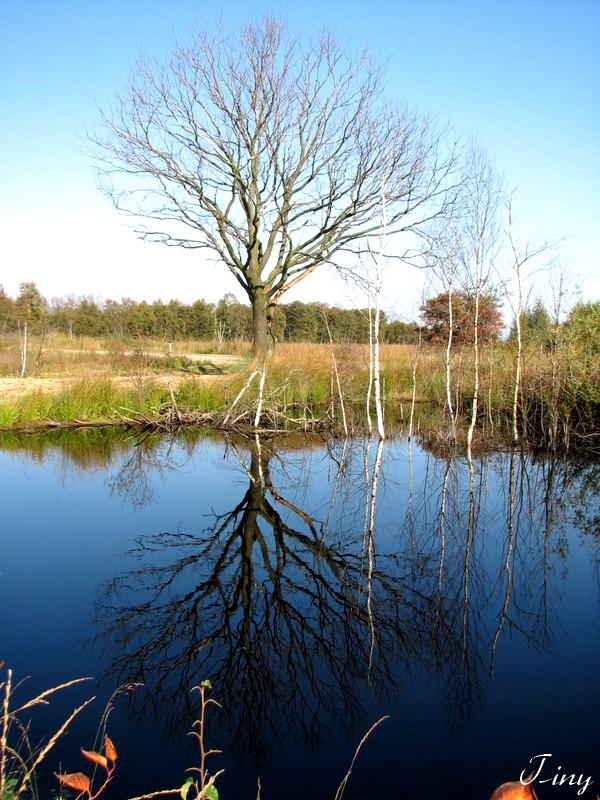 Natuurgebied Bargerveen in Drenthe