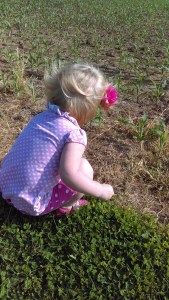 friday evening family fun, baby corn