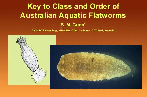 Class and Order of Australian Aquatic Flatworms home screen