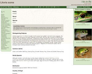 Life in the Suburbs Frog key example fact sheet