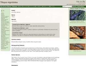 Life in the Suburbs Reptile Lucid key example fact sheet