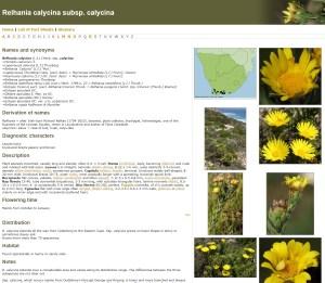 Relhania and Macowania groups fact sheet example