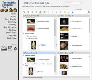 Terrestrial Mollusc Tool Lucid key interface