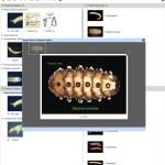 Key to Families of Australian Aquatic Diptera Larvae Lucid key taxon image gallery example