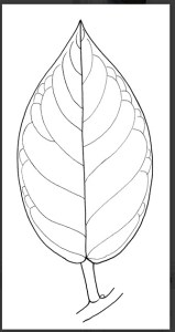 Seedlings of invasive plants Lucid key feature image gallery example