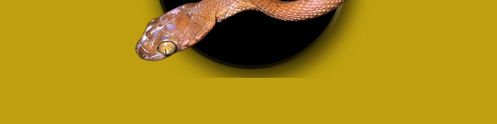 Australian Snake ID banner