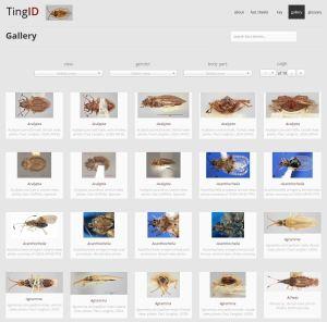 TingID Image gallery example