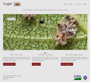 TingID Home page