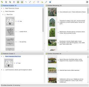 NZ Myrtaceae Lucid web application