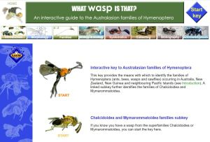 What Wasp is That? Key selection home screen