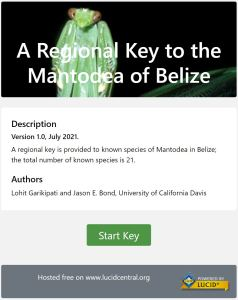 Key to the Mantodea of Belize home page