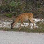 key deer florida keys getaway